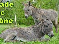 Automn'âne à Juziers !